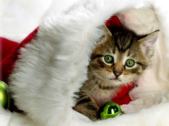 Christmas Kitten - A cute kitten, wearing a costume for Christmas, awaiting a kickshaw. - , Christmas, kitten, kittens, animals, animal, holiday, holidays, feast, feasts, festivity, festivities, celebration, celebrations, seasons, season, cute, costume, costumes, kickshaw, kickshaws - A cute kitten, wearing a costume for Christmas, awaiting a kickshaw. Solve free online Christmas Kitten puzzle games or send Christmas Kitten puzzle game greeting ecards  from puzzles-games.eu.. Christmas Kitten puzzle, puzzles, puzzles games, puzzles-games.eu, puzzle games, online puzzle games, free puzzle games, free online puzzle games, Christmas Kitten free puzzle game, Christmas Kitten online puzzle game, jigsaw puzzles, Christmas Kitten jigsaw puzzle, jigsaw puzzle games, jigsaw puzzles games, Christmas Kitten puzzle game ecard, puzzles games ecards, Christmas Kitten puzzle game greeting ecard