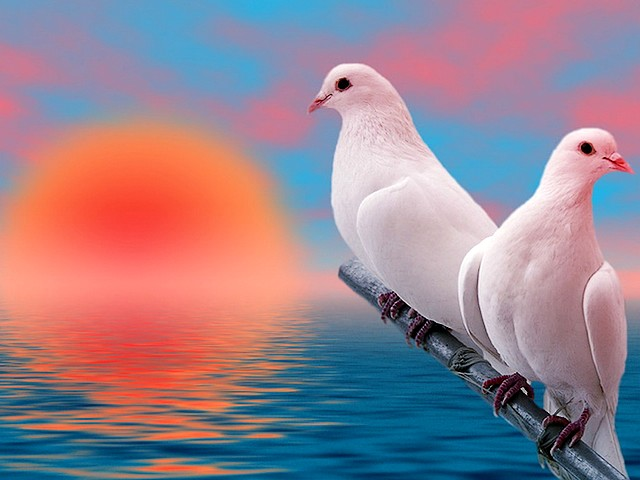 Fourth of July White Doves at Sunrise Wallpaper - Wallpaper with beautiful white doves at sunrise on Fourth of July, the Independence Day of America, symbol of Peace and Hope. - , Fourth, 4th, July, white, doves, dove, sunrise, sunrises, wallpaper, wallpapers, animals, animal, holidays, holiday, cartoon, cartoons, places, place, commemoration, commemorations, celebration, celebrations, event, events, show, shows, beautiful, Independence, Day, days, America, symbol, symbols, peace, hope - Wallpaper with beautiful white doves at sunrise on Fourth of July, the Independence Day of America, symbol of Peace and Hope. Solve free online Fourth of July White Doves at Sunrise Wallpaper puzzle games or send Fourth of July White Doves at Sunrise Wallpaper puzzle game greeting ecards  from puzzles-games.eu.. Fourth of July White Doves at Sunrise Wallpaper puzzle, puzzles, puzzles games, puzzles-games.eu, puzzle games, online puzzle games, free puzzle games, free online puzzle games, Fourth of July White Doves at Sunrise Wallpaper free puzzle game, Fourth of July White Doves at Sunrise Wallpaper online puzzle game, jigsaw puzzles, Fourth of July White Doves at Sunrise Wallpaper jigsaw puzzle, jigsaw puzzle games, jigsaw puzzles games, Fourth of July White Doves at Sunrise Wallpaper puzzle game ecard, puzzles games ecards, Fourth of July White Doves at Sunrise Wallpaper puzzle game greeting ecard