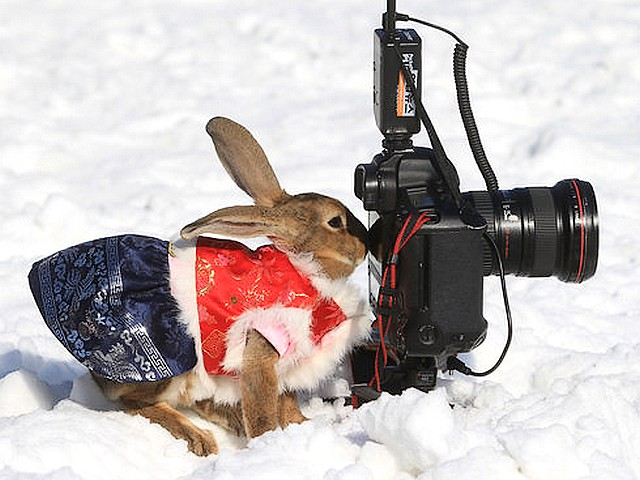 Rabbit in Korean Costume behind Camera at Everland Amusement Park in Seoul South Korea - Rabbit in Korean costume behind a camera at the Zoo of the Everland Amusement Park, located in Yongin, a suburb of Seoul, South Korea, celebrating the upcoming Year of the Rabbit (Dec 16, 2010). - , rabbit, rabbits, Korean, costume, costumes, camera, cameras, Everland, Amusement, Park, parks, Seoul, South, Korea, animals, animal, holidays, holiday, festival, festivals, celebrations, celebration, places, place, travel, travels, tour, tours, trips, trip, excursion, excursions, Zoo, Yongin, suburb, suburbs, year, years - Rabbit in Korean costume behind a camera at the Zoo of the Everland Amusement Park, located in Yongin, a suburb of Seoul, South Korea, celebrating the upcoming Year of the Rabbit (Dec 16, 2010). Solve free online Rabbit in Korean Costume behind Camera at Everland Amusement Park in Seoul South Korea puzzle games or send Rabbit in Korean Costume behind Camera at Everland Amusement Park in Seoul South Korea puzzle game greeting ecards  from puzzles-games.eu.. Rabbit in Korean Costume behind Camera at Everland Amusement Park in Seoul South Korea puzzle, puzzles, puzzles games, puzzles-games.eu, puzzle games, online puzzle games, free puzzle games, free online puzzle games, Rabbit in Korean Costume behind Camera at Everland Amusement Park in Seoul South Korea free puzzle game, Rabbit in Korean Costume behind Camera at Everland Amusement Park in Seoul South Korea online puzzle game, jigsaw puzzles, Rabbit in Korean Costume behind Camera at Everland Amusement Park in Seoul South Korea jigsaw puzzle, jigsaw puzzle games, jigsaw puzzles games, Rabbit in Korean Costume behind Camera at Everland Amusement Park in Seoul South Korea puzzle game ecard, puzzles games ecards, Rabbit in Korean Costume behind Camera at Everland Amusement Park in Seoul South Korea puzzle game greeting ecard