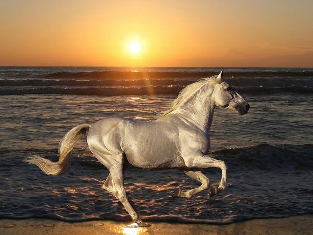 Silver Horse Wallpaper - Wallpaper with a gorgeous Silver horse, that is galloping with pride at the beach, during beautiful sunset. The pigments of the coat of horses with the basic colors as Chestnut, Bay, Brown and Black, may be modified by different  genes as Cream, Champagne, Dun, Pearl and Silver, and as a result to obtain an array of colors ranging from white to black. - , silver, horse, horses, wallpaper, wallpapers, animals, animal, gorgeous, pride, beach, beaches, beautiful, sunset, pigments, pigment, coat, coats, basic, colors, color, Chestnut, Bay, Brown, Black, genes, gene, Cream, Champagne, Dun, Pearl, result, results, array, white - Wallpaper with a gorgeous Silver horse, that is galloping with pride at the beach, during beautiful sunset. The pigments of the coat of horses with the basic colors as Chestnut, Bay, Brown and Black, may be modified by different  genes as Cream, Champagne, Dun, Pearl and Silver, and as a result to obtain an array of colors ranging from white to black. Solve free online Silver Horse Wallpaper puzzle games or send Silver Horse Wallpaper puzzle game greeting ecards  from puzzles-games.eu.. Silver Horse Wallpaper puzzle, puzzles, puzzles games, puzzles-games.eu, puzzle games, online puzzle games, free puzzle games, free online puzzle games, Silver Horse Wallpaper free puzzle game, Silver Horse Wallpaper online puzzle game, jigsaw puzzles, Silver Horse Wallpaper jigsaw puzzle, jigsaw puzzle games, jigsaw puzzles games, Silver Horse Wallpaper puzzle game ecard, puzzles games ecards, Silver Horse Wallpaper puzzle game greeting ecard