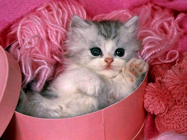 Valentines Day Cute Kitten Wallpaper Puzzles Games Eu Puzzles Games
