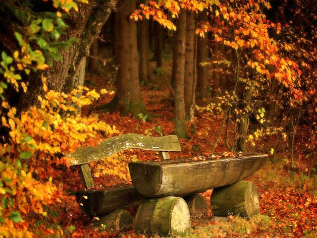 Autumn Landscape Wooden Bench in Forest Park - Beautiful landscape in autumn colors with wooden bench, a lovely place for a brief romantic respite in a forest park, strewn with yellow fallen leaves. - , autumn, landscape, landscapes, wooden, bench, benches, forest, forests, park, parks, nature, natures, beautiful, colors, color, lovely, place, places, romantic, respite, yellow, leaves, leaf - Beautiful landscape in autumn colors with wooden bench, a lovely place for a brief romantic respite in a forest park, strewn with yellow fallen leaves. Solve free online Autumn Landscape Wooden Bench in Forest Park puzzle games or send Autumn Landscape Wooden Bench in Forest Park puzzle game greeting ecards  from puzzles-games.eu.. Autumn Landscape Wooden Bench in Forest Park puzzle, puzzles, puzzles games, puzzles-games.eu, puzzle games, online puzzle games, free puzzle games, free online puzzle games, Autumn Landscape Wooden Bench in Forest Park free puzzle game, Autumn Landscape Wooden Bench in Forest Park online puzzle game, jigsaw puzzles, Autumn Landscape Wooden Bench in Forest Park jigsaw puzzle, jigsaw puzzle games, jigsaw puzzles games, Autumn Landscape Wooden Bench in Forest Park puzzle game ecard, puzzles games ecards, Autumn Landscape Wooden Bench in Forest Park puzzle game greeting ecard