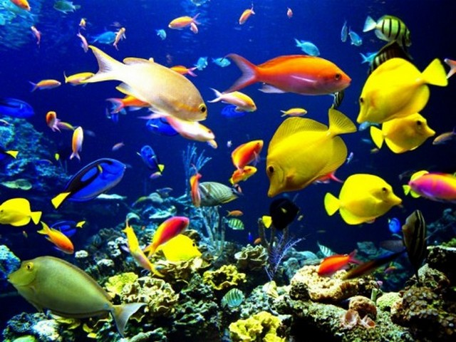 Beauty - The Ocean beauty with tropical fishes. - , Beauty, ocean, life, tropic, fish, fishes - The Ocean beauty with tropical fishes. Solve free online Beauty puzzle games or send Beauty puzzle game greeting ecards  from puzzles-games.eu.. Beauty puzzle, puzzles, puzzles games, puzzles-games.eu, puzzle games, online puzzle games, free puzzle games, free online puzzle games, Beauty free puzzle game, Beauty online puzzle game, jigsaw puzzles, Beauty jigsaw puzzle, jigsaw puzzle games, jigsaw puzzles games, Beauty puzzle game ecard, puzzles games ecards, Beauty puzzle game greeting ecard
