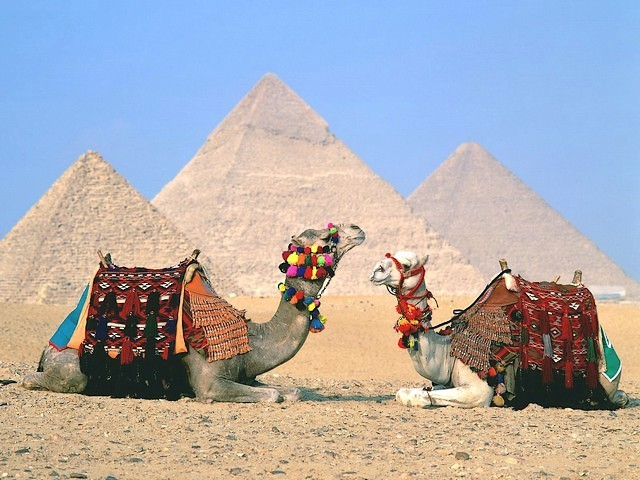 Camels beside the Great Pyramids of Giza Cairo Egypt Wallpaper - A beautiful wallpaper which depicts camels beside the Great Pyramids (the pyramids of Cheops, Khafre and Menkaures), in the complex of ancient monuments on Giza plateau, at the outskirts of Cairo, Egypt, an unbreakable relationship existed for centuries. - , camels, camel, great, pyramids, pyramid, Giza, Cairo, Egypt, wallpaper, wallpapers, places, place, animals, animal, cartoon, cartoons, travel, travels, tour, tours, trip, trips, Cheops, Khafre, Menkaures, complex, complexes, ancient, monuments, monument, plateau, plateaus, outskirts, outskirt, unbreakable, relationship, relationships, centuries, century - A beautiful wallpaper which depicts camels beside the Great Pyramids (the pyramids of Cheops, Khafre and Menkaures), in the complex of ancient monuments on Giza plateau, at the outskirts of Cairo, Egypt, an unbreakable relationship existed for centuries. Solve free online Camels beside the Great Pyramids of Giza Cairo Egypt Wallpaper puzzle games or send Camels beside the Great Pyramids of Giza Cairo Egypt Wallpaper puzzle game greeting ecards  from puzzles-games.eu.. Camels beside the Great Pyramids of Giza Cairo Egypt Wallpaper puzzle, puzzles, puzzles games, puzzles-games.eu, puzzle games, online puzzle games, free puzzle games, free online puzzle games, Camels beside the Great Pyramids of Giza Cairo Egypt Wallpaper free puzzle game, Camels beside the Great Pyramids of Giza Cairo Egypt Wallpaper online puzzle game, jigsaw puzzles, Camels beside the Great Pyramids of Giza Cairo Egypt Wallpaper jigsaw puzzle, jigsaw puzzle games, jigsaw puzzles games, Camels beside the Great Pyramids of Giza Cairo Egypt Wallpaper puzzle game ecard, puzzles games ecards, Camels beside the Great Pyramids of Giza Cairo Egypt Wallpaper puzzle game greeting ecard