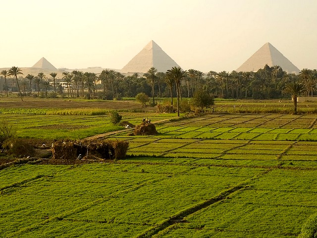 Pyramids of Giza across Fertile Field Cairo Egypt - A beautiful view of the Pyramids of Giza across a fertile field near the Nile River. The rich fertile soil resulting from annual inundations of the Nile River and the meshwork of ditches and canals for irrigation, gave the ancient Egyptians possibility to produce an abundance of food and to devote more time and resources to cultural, technological, and artistic pursuits, which were contributed to the success of the ancient Egypt. - , pyramids, pyramid, Giza, fertile, field, fields, Cairo, Egypt, places, place, travel, travels, tour, tours, trip, trips, beautiful, view, views, Nile, river, rivers, rich, soil, soils, annual, inundations, inundation, meshwork, ditches, ditch, canals, canal, irrigation, irrigations, ancient, Egyptians, Egyptian, possibility, possibilities, abundance, food, foods, time, times, resources, resource, cultural, technological, artistic, pursuits, pursuit, success, successes - A beautiful view of the Pyramids of Giza across a fertile field near the Nile River. The rich fertile soil resulting from annual inundations of the Nile River and the meshwork of ditches and canals for irrigation, gave the ancient Egyptians possibility to produce an abundance of food and to devote more time and resources to cultural, technological, and artistic pursuits, which were contributed to the success of the ancient Egypt. Solve free online Pyramids of Giza across Fertile Field Cairo Egypt puzzle games or send Pyramids of Giza across Fertile Field Cairo Egypt puzzle game greeting ecards  from puzzles-games.eu.. Pyramids of Giza across Fertile Field Cairo Egypt puzzle, puzzles, puzzles games, puzzles-games.eu, puzzle games, online puzzle games, free puzzle games, free online puzzle games, Pyramids of Giza across Fertile Field Cairo Egypt free puzzle game, Pyramids of Giza across Fertile Field Cairo Egypt online puzzle game, jigsaw puzzles, Pyramids of Giza across Fertile Field Cairo Egypt jigsaw puzzle, jigsaw puzzle games, jigsaw puzzles games, Pyramids of Giza across Fertile Field Cairo Egypt puzzle game ecard, puzzles games ecards, Pyramids of Giza across Fertile Field Cairo Egypt puzzle game greeting ecard