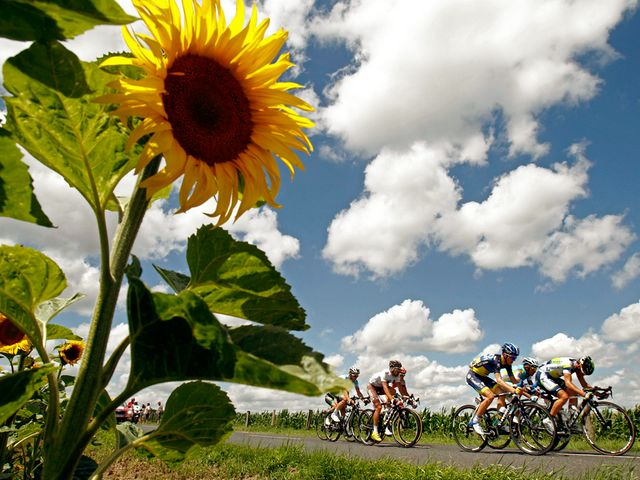 Tour de France 2012 Riders near Field with Sunflowers - The Riders of the Tour de France are passing near to field with sunflowers, during the seventh stage between Tomblaine and La Planche des Belles Filles on July 7, 2012. The annual race of bicycles of the Tour de France is held in France and the nearby countries. The 99-th edition of the Tour de France has begun in the city of Liege in Belgium on June 30th and is scheduled to end on the Champs-Elysees in Paris on July 22th 2012. It will be made in 20 stages and will cover a total distance of 3,497 kilometers. Besides Belgium and France, the tour will also pass through Switzerland. - , tour, tours, France, 2012, riders, rider, field, fields, sunflowers, sport, sports, places, place, travel, travels, trip, trips, stage, stages, Tomblaine, LaPlanche, Planche, Belles, Filles, July, annual, race, races, bicycles, bicycle, nearby, countries, country, 99-th, edition, editions, city, cities, Liege, Belgium, June, Champs-Elysees, Champs, Elysees, Paris, distance, distances, 3, 497, kilometers, kilometer, Switzerland - The Riders of the Tour de France are passing near to field with sunflowers, during the seventh stage between Tomblaine and La Planche des Belles Filles on July 7, 2012. The annual race of bicycles of the Tour de France is held in France and the nearby countries. The 99-th edition of the Tour de France has begun in the city of Liege in Belgium on June 30th and is scheduled to end on the Champs-Elysees in Paris on July 22th 2012. It will be made in 20 stages and will cover a total distance of 3,497 kilometers. Besides Belgium and France, the tour will also pass through Switzerland. Solve free online Tour de France 2012 Riders near Field with Sunflowers puzzle games or send Tour de France 2012 Riders near Field with Sunflowers puzzle game greeting ecards  from puzzles-games.eu.. Tour de France 2012 Riders near Field with Sunflowers puzzle, puzzles, puzzles games, puzzles-games.eu, puzzle games, online puzzle games, free puzzle games, free online puzzle games, Tour de France 2012 Riders near Field with Sunflowers free puzzle game, Tour de France 2012 Riders near Field with Sunflowers online puzzle game, jigsaw puzzles, Tour de France 2012 Riders near Field with Sunflowers jigsaw puzzle, jigsaw puzzle games, jigsaw puzzles games, Tour de France 2012 Riders near Field with Sunflowers puzzle game ecard, puzzles games ecards, Tour de France 2012 Riders near Field with Sunflowers puzzle game greeting ecard