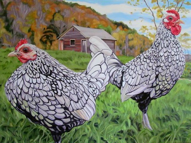 Silver Sebright Bantam Pair by Amy Mosher Vermont USA - A beautiful pair of Silver Sebright chickens which are living in a small farm at Vermont, the New England, a region of the northeastern USA, an oil painting on canvas by Amy Mosher. The Sebright (silver and golden) is an ornamental breed of miniature poultry, created in the 19th century by Sir John Saunders Sebright. They are usually one-fifth the size of the standard breed and have been brought by European sailors from the city of Bantam, a seaport in Indonesia. - , silver, Sebright, Bantam, pair, pairs, Amy, Mosher, Vermont, USA, art, arts, animals, animal, places, place, travel, travels, tout, tours, trip, trips, beautiful, chickens, chicken, farm, farms, New, England, region, regions, northeastern, oil, painting, paintings, canvas, canvases, golden, ornamental, breed, breeds, miniature, poultry, century, centuries, Sir, John, Saunders, size, sizes, standard, European, sailors, sailor, city, cities, seaport, seaports, Indonesia - A beautiful pair of Silver Sebright chickens which are living in a small farm at Vermont, the New England, a region of the northeastern USA, an oil painting on canvas by Amy Mosher. The Sebright (silver and golden) is an ornamental breed of miniature poultry, created in the 19th century by Sir John Saunders Sebright. They are usually one-fifth the size of the standard breed and have been brought by European sailors from the city of Bantam, a seaport in Indonesia. Подреждайте безплатни онлайн Silver Sebright Bantam Pair by Amy Mosher Vermont USA пъзел игри или изпратете Silver Sebright Bantam Pair by Amy Mosher Vermont USA пъзел игра поздравителна картичка  от puzzles-games.eu.. Silver Sebright Bantam Pair by Amy Mosher Vermont USA пъзел, пъзели, пъзели игри, puzzles-games.eu, пъзел игри, online пъзел игри, free пъзел игри, free online пъзел игри, Silver Sebright Bantam Pair by Amy Mosher Vermont USA free пъзел игра, Silver Sebright Bantam Pair by Amy Mosher Vermont USA online пъзел игра, jigsaw puzzles, Silver Sebright Bantam Pair by Amy Mosher Vermont USA jigsaw puzzle, jigsaw puzzle games, jigsaw puzzles games, Silver Sebright Bantam Pair by Amy Mosher Vermont USA пъзел игра картичка, пъзели игри картички, Silver Sebright Bantam Pair by Amy Mosher Vermont USA пъзел игра поздравителна картичка