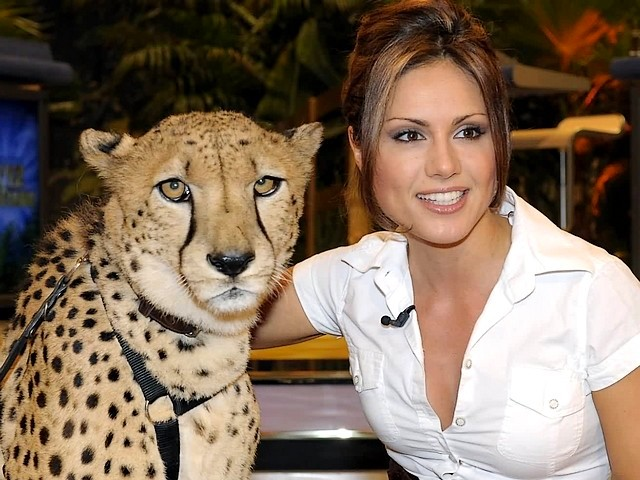 Nazan Eckes with Cheetah in Germany - A strikingly beautiful and regal cheetah with Nazan Eckes, one of most famous and an attractive presenters in Germany of Turkish descent, in the show 'The incredible quiz of the animals' of the German television channel RTL. - , Nazan, Eckes, cheetah, cheetahs, Germany, celebrities, celebrity, animals, animal, show, shows, places, place, actress, actresses, author, authors, newsreader, newsreaders, travel, travels, tour, tours, trip, trips, strikingly, beautiful, regal, famous, attractive, presenters, presenter, Turkish, descent, descents, incredible, quiz, quizes, German, television, televisions, channel, channels, RTL - A strikingly beautiful and regal cheetah with Nazan Eckes, one of most famous and an attractive presenters in Germany of Turkish descent, in the show 'The incredible quiz of the animals' of the German television channel RTL. Solve free online Nazan Eckes with Cheetah in Germany puzzle games or send Nazan Eckes with Cheetah in Germany puzzle game greeting ecards  from puzzles-games.eu.. Nazan Eckes with Cheetah in Germany puzzle, puzzles, puzzles games, puzzles-games.eu, puzzle games, online puzzle games, free puzzle games, free online puzzle games, Nazan Eckes with Cheetah in Germany free puzzle game, Nazan Eckes with Cheetah in Germany online puzzle game, jigsaw puzzles, Nazan Eckes with Cheetah in Germany jigsaw puzzle, jigsaw puzzle games, jigsaw puzzles games, Nazan Eckes with Cheetah in Germany puzzle game ecard, puzzles games ecards, Nazan Eckes with Cheetah in Germany puzzle game greeting ecard