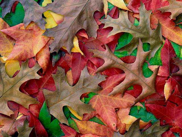 Autumn Carpet Wallpaper - Wallpaper with a carpet of leaves in lovely autumn colours. - , autumn, autumns, carpet, carpets, wallpaper, wallpapers, flowers, flower, cartoon, cartoons, season, seasons, nature, natures, leaves, leaf, lovely, colours, colour - Wallpaper with a carpet of leaves in lovely autumn colours. Solve free online Autumn Carpet Wallpaper puzzle games or send Autumn Carpet Wallpaper puzzle game greeting ecards  from puzzles-games.eu.. Autumn Carpet Wallpaper puzzle, puzzles, puzzles games, puzzles-games.eu, puzzle games, online puzzle games, free puzzle games, free online puzzle games, Autumn Carpet Wallpaper free puzzle game, Autumn Carpet Wallpaper online puzzle game, jigsaw puzzles, Autumn Carpet Wallpaper jigsaw puzzle, jigsaw puzzle games, jigsaw puzzles games, Autumn Carpet Wallpaper puzzle game ecard, puzzles games ecards, Autumn Carpet Wallpaper puzzle game greeting ecard