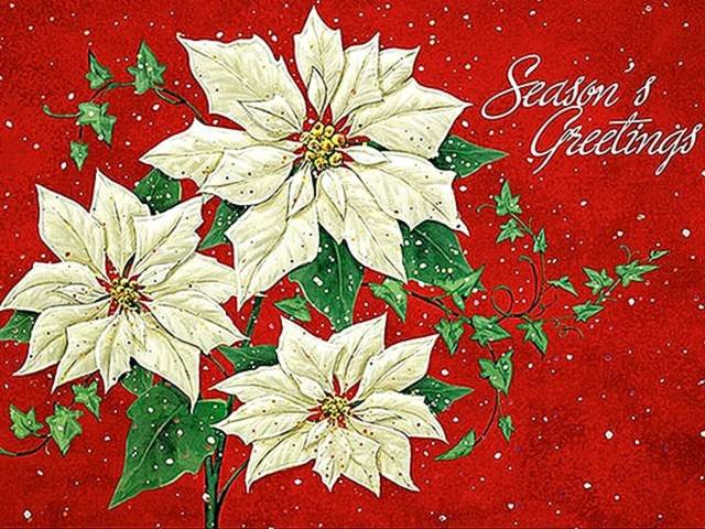 christmas card with poinsettia christmas card with beautiful white poinsettia for - Christmas Poinsettia