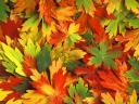Autumn Kaleidoscope Wallpaper