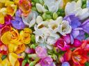 Freesias Wallpaper