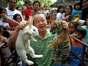 Rabbit and Tiger at Malabon Zoo in Northern Metro Manila Philippines