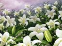 Easter Lilies Wallpaper