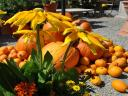 Halloween Pumpkins and Autumn Flowers