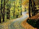 Autumn Road in Percy Warner Park Nashville Tennessee