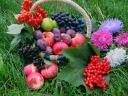 Fruits and Flowers Wallpaper