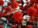 Decorative Red Lanterns at Ditan Park in Beijing China